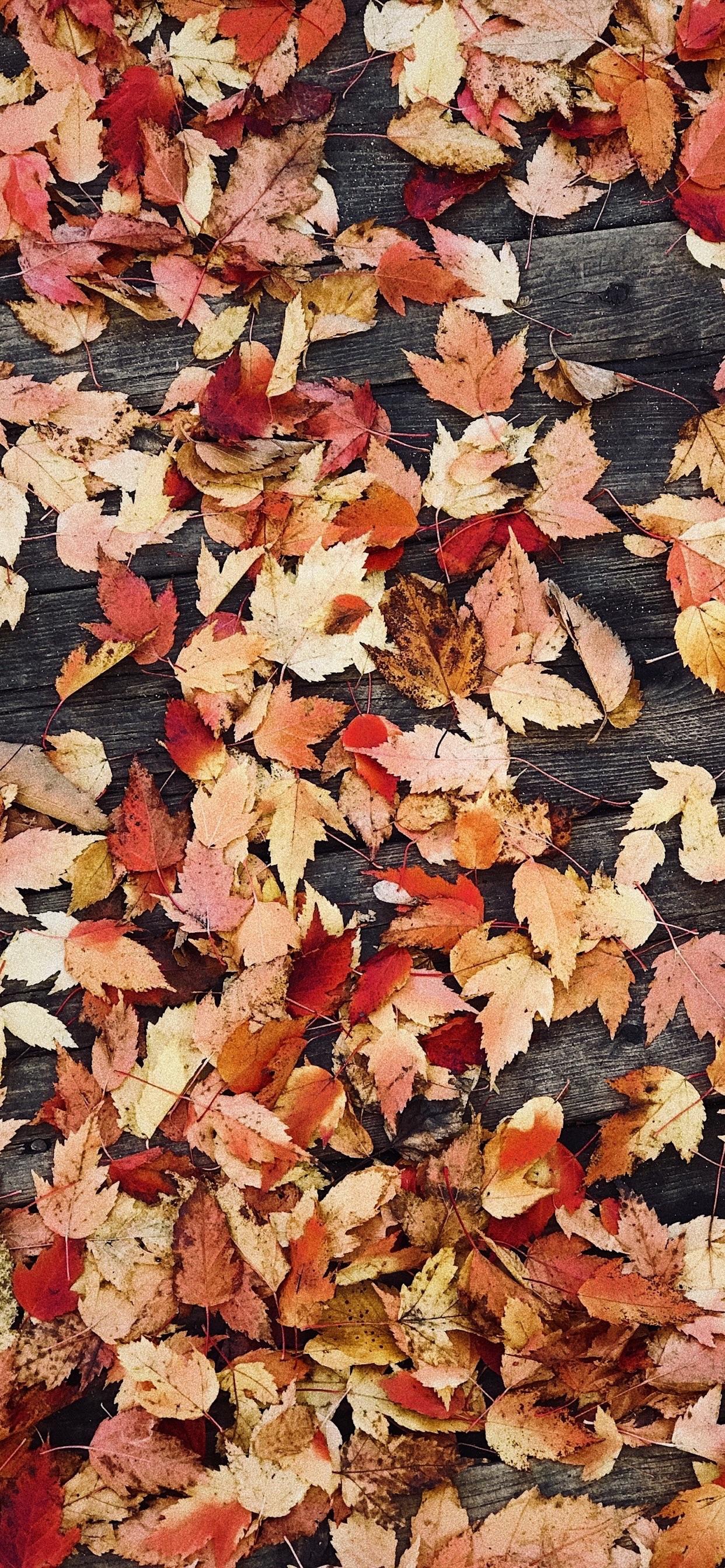 Wallpaper Weekends: Autumn iPhone XS Max Wallpapers