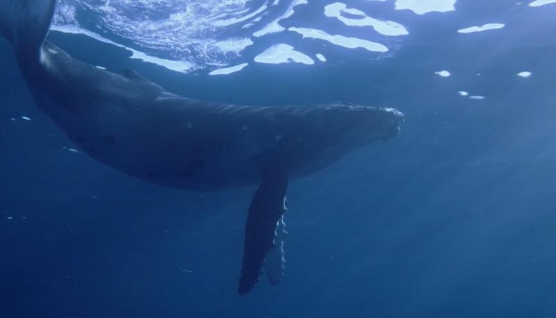 Apple Adds New Underwater Screensavers to Apple TV